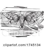 Woodcut Winged Cicada
