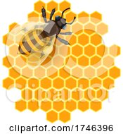 Bee On Honeycombs
