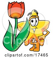 Star Mascot Cartoon Character With A Red Tulip Flower In The Spring