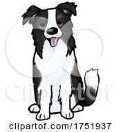 Cute Sitting Border Collie Dog