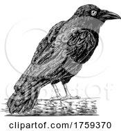 Crow Raven Corvus Bird Vintage Engraved Woodcut