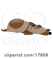 Clipart Illustration Of A Lazy Old Brown Hound Dog Lying On His Belly And Keeping One Eye Open