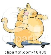 Clipart Illustration Of A Fat Orange Cat Skateboarding On A Blue Skateboard