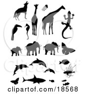 Clipart Illustration Of A Collection Of Animal Silhouettes Including A Wolf Or Coyote Giraffes Jellyfish Toucan Seahorse Gecko Elephants Butterflies Dolphins Triggerfish Lionfish A Shark And Clownfishes by Rasmussen Images #COLLC18568-0030