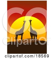 Clipart Illustration Of A Giraffe Pair Silhouetted On A Hilly African Landscape In Front Of A Big Red Sunset by Rasmussen Images