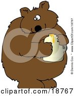 Wild Brown Bear Holding A Honey Jar And Looking At The Viewer After Being Caught Stealing