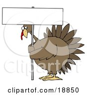 Clipart Illustration Of A Plump Brown Turkey Bird On A Farm Looking Nervously Around The Pole Of A Blank Sign That Hes Holding by Dennis Cox