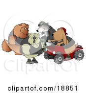 Clip Art Graphic Of A Border Collie Wearing A Vest And Driving A Green Atv Beside A Bloodhound On A Red Quad Chatting With A Tough Bulldog And Chow Chow by Dennis Cox