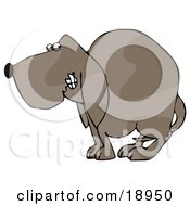 Clipart Illustration Of A Frightened Brown Dog Quivering With His Tail Tucked Between His Legs