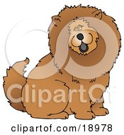 Clipart Illustration Of A Cute And Fluffy Brown Chow Chow Dog Sticking His Black Tongue Out And Looking At The Viewer