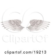 Clipart Illustration Of Two Large White Feathered Wings Spread Open Isolated On White by AtStockIllustration