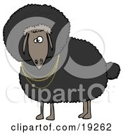 Clipart Illustration Of A Black Sheep Wearing Golden Necklaces And Looking Outwards by Dennis Cox