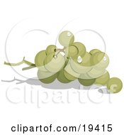 Group Of Ripe And Whole Green Grapes In A Bunch On The Vine