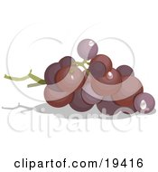 Clipart Illustration Of Whole Ripe Purple Grapes In A Bunch On The Vine