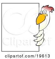White Chicken Bird Peeking Around A Large White Sign