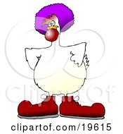 Goofy White Farm Chicken Dressed As A Clown Wearing Big Red Shoes A Red Nose And A Purple Wig
