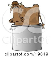Confused Brown Cow Standing In A Giant Stock Pot