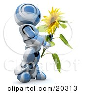 Clipart Illustration Of A Daydreaming Blue And White AO Maru Robot Carrying A Beautiful Yellow Sunflower Over A White Background