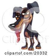 Poster, Art Print Of Cute And Happy Doberman Pinschers Puppy With Big Brown Eyes Panting With His Tongue Hanging Out