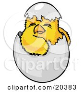 Cute Baby Yellow Chick Hatchling Hatching Out Of A Cracked Chicken Egg On Easter