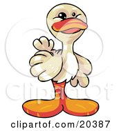 Cute And Friendly White Duck With An Orange Beak And Feet Smiling At The Viewer