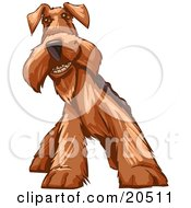 Social Airedale Terrier Dog Grinning At The Viewer