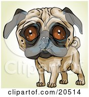 Poster, Art Print Of Friendly Pug Dog Looking Outwards