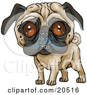 Poster, Art Print Of Cute Pug Dog Grinning At The Viewer