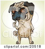 Poster, Art Print Of Bossy Pug Dog Signaling Over His Shoulder For His Owner To Pick Up His Poop