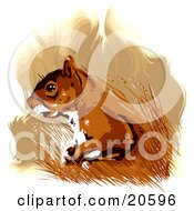 Poster, Art Print Of Brown And White Squirrel In Tall Grasses