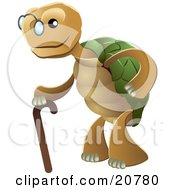 Cute Senior Tortoise Turtle Wearing Glasses And Strolling With A Cane