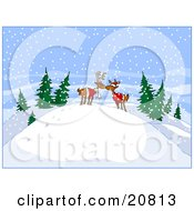 Two Reindeer Smooching On Top Of A Hill In The Woods On A Snowy Day