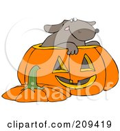 Royalty Free RF Clipart Illustration Of A Dog Inside A Halloween Pumpkin