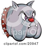 Poster, Art Print Of Tough Bulldogs Head With A Red Nose Purple Eyes Fangs And A Spiked Collar Over A White Background