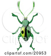 Poster, Art Print Of Green Beetle With Two Spots On Its Wings And Long Hairy Antennae Over A White Background