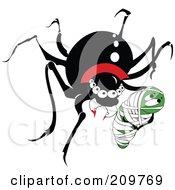 Black Widow Vampire Spider With Prey