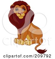 Handsome Male Lion Sitting Upright And Looking At The Viewer