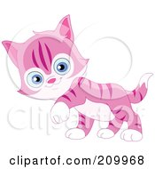 Cute Pink Striped Kitten Walking