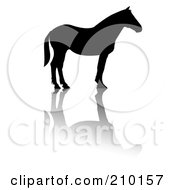 Royalty Free RF Clipart Illustration Of A Profiled Black Silhouetted Horse With A Shadow
