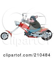 Royalty Free RF Clipart Illustration Of A Tough Hog Riding A Red Chopper Motorcycle And Speeding Past by Dennis Holmes Designs #COLLC210484-0087