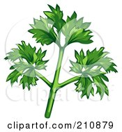 Royalty Free RF Clipart Illustration Of A Sprig Of Fresh Organic Parsley