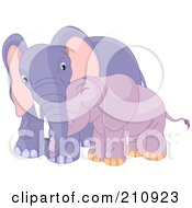Poster, Art Print Of Cute Baby Purple Elephant Cuddling With Its Mother