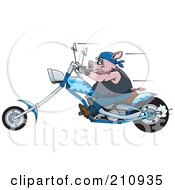 Royalty Free RF Clipart Illustration Of A Tough Hog Riding A Blue Chopper Motorcycle And Speeding Past