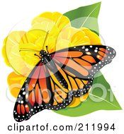 Monarch Butterfly On A Yellow Flower And Green Leaves