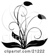 Elegant Black And White Flourish Flowering Plant With Curving Leaves