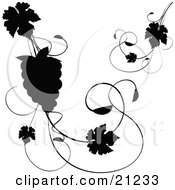 Clipart Illustration Of A Silhouetted Grapevine With Leaves And A Bundle Of Grapes Over A White Background