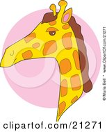 Giraffe Head In Profile Over A Pink Circle by Maria Bell