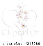 Stalk Of Pretty Pastel Purple Orchid Flowers