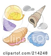 Royalty Free RF Clipart Illustration Of A Digital Collage Of Sea Shells by visekart