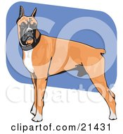 Clipart Illustration Of A Muscular Brown White And Black Boxer Dog Standing With His Body In Profile His Head Facing Front